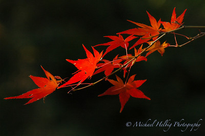 Autumn / Fall in Japan